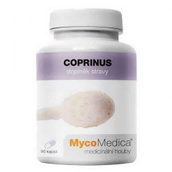 COPRINUS – Coprinus comatus – Hnojník obyčajný – K36
